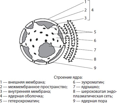 какие признаки паразитов в организме