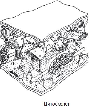 lechenie-tsistita-na-nachalnoy-stadii