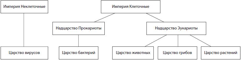 Схема связи гетеротрофов в энергопотреблении
